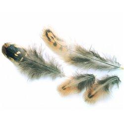 Fasanhöna skulderfjäder