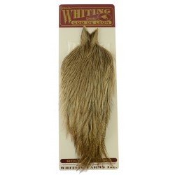 Whiting Coq de Leon