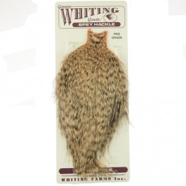 Whiting Spey Hackle Pro Grade - Grizzly dyed Salmon