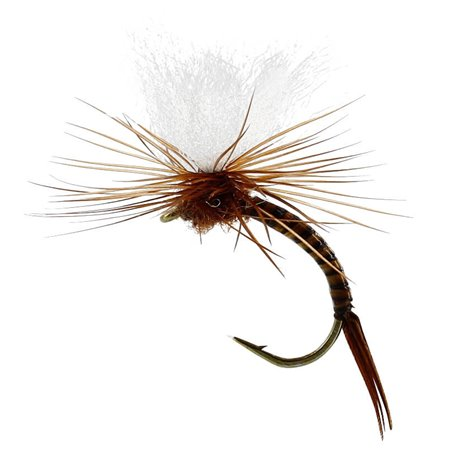Aurivillii Emerger Quill Brown