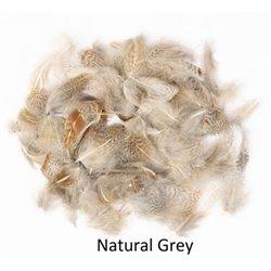 Rapphöna grå nackfjäder