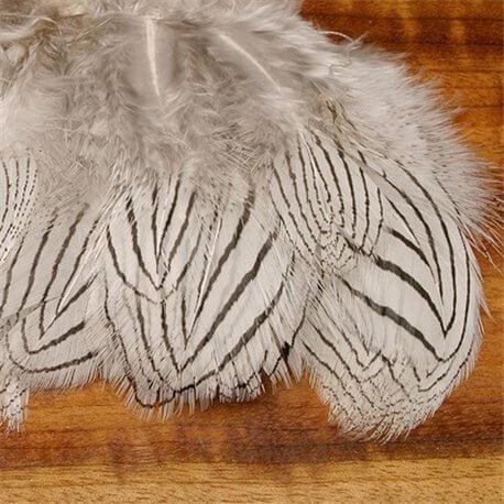 Silverfasan cheeks