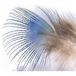 Påfågel blå nackfjäder