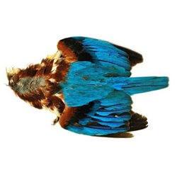 Kingfisher / Kungsfiskare